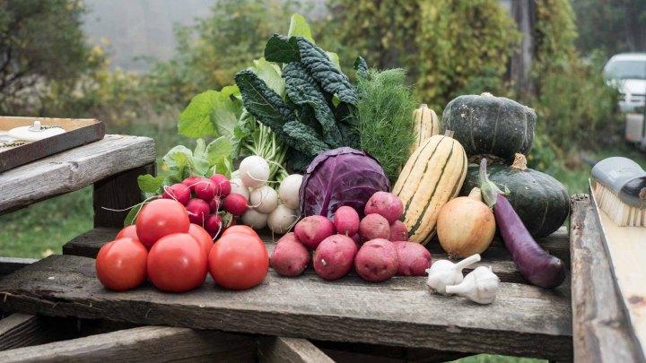 BeetBox Vegetables 2