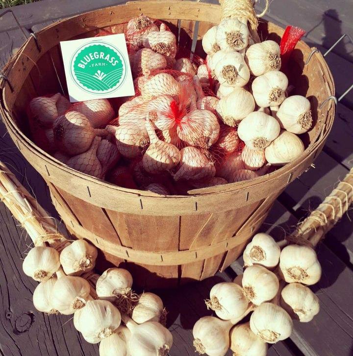 Bluegrass Farm Garlic